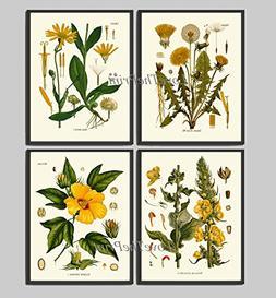 Flowers Print Set of 4 Antique Yellow Dandelion Hibiscus Hom